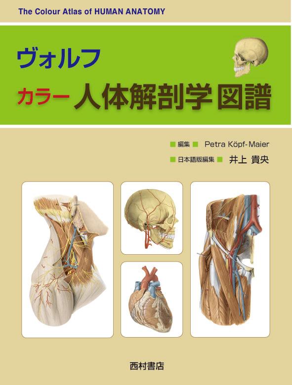 『ヴォルフ カラー人体解剖学図譜』