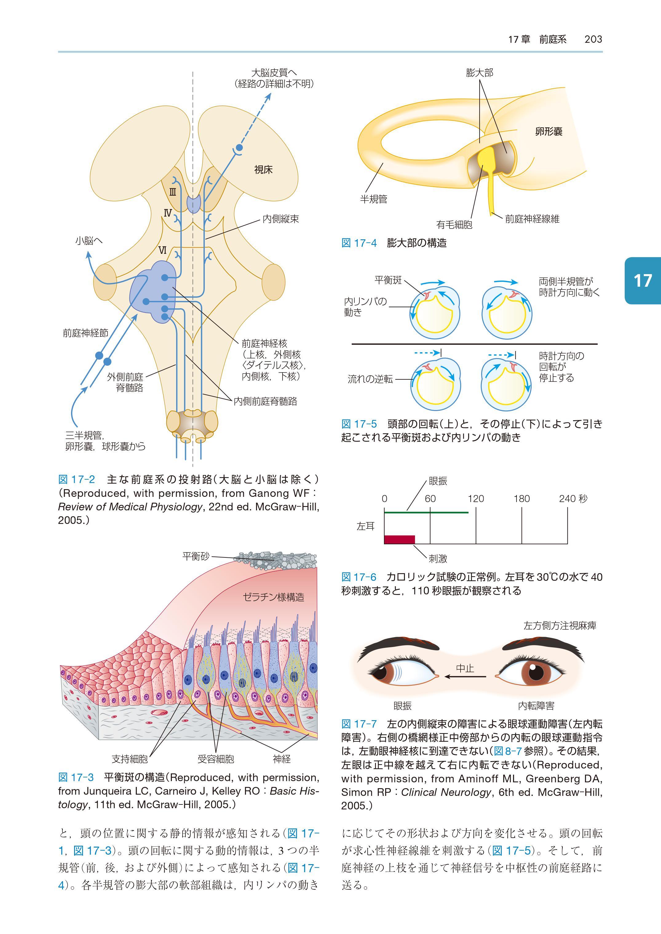 『ワックスマン脳神経解剖学』中身ページ182