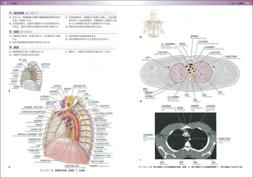 『パンスキー ジェスト 解剖学』Ⅱ 78-79